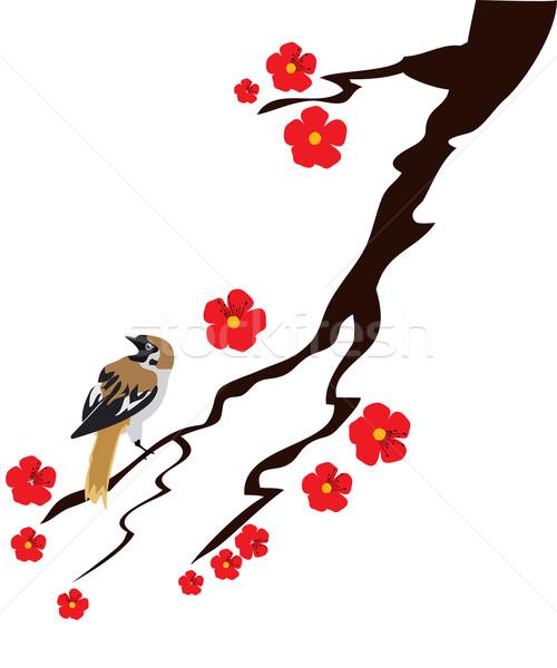 воробей Cherry Blossom знак Живопись силуэта Вишневое Сток-фото © lilac