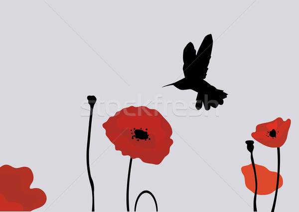 poppies Stock photo © lilac