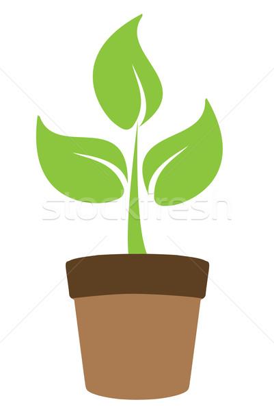 Bitki yeşil pot çim yaprak bahçe Stok fotoğraf © lilac