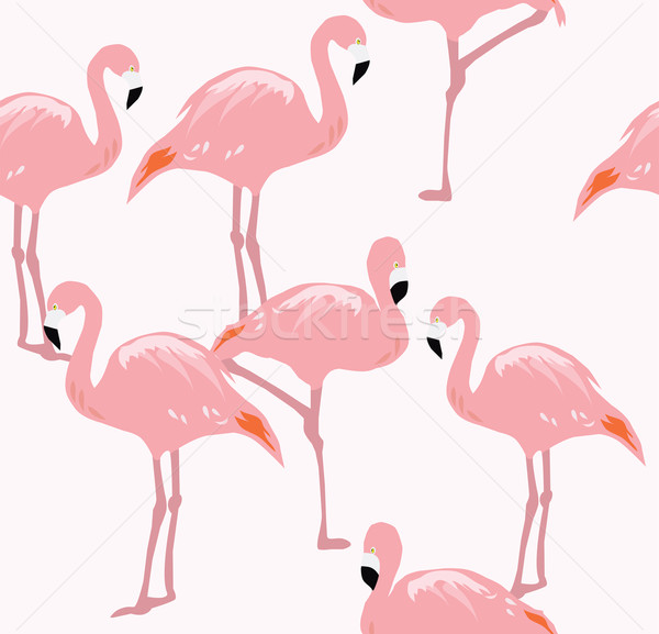 Vector Flamingo Bird Stock photo © lilac