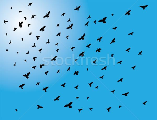 Stok fotoğraf: Kuşlar · uçan · doğa · kuş · seyahat