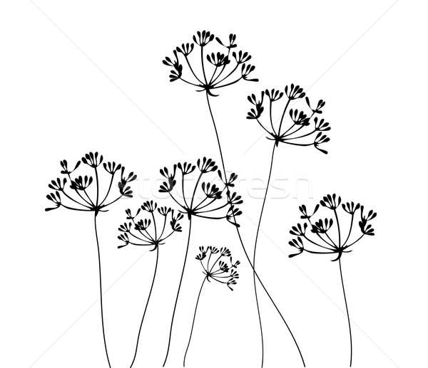 Fennel Flower Stock photo © lilac