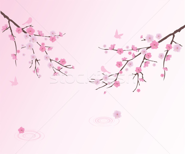 Cherry Blossom Stock photo © lilac