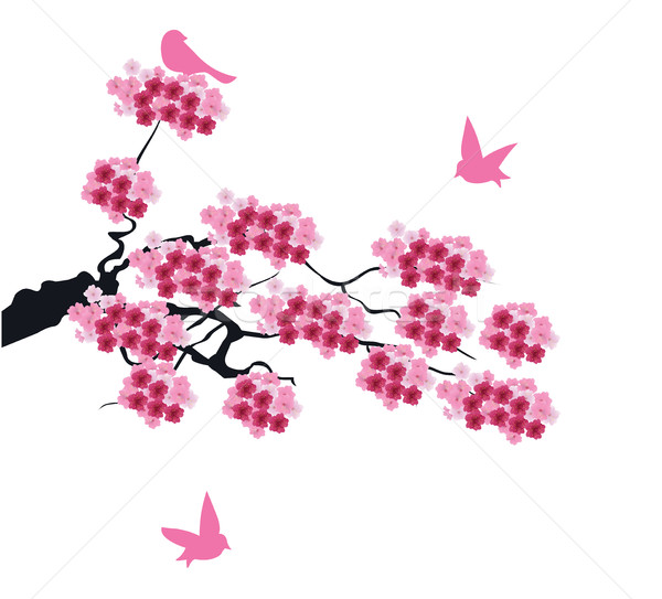 Foto stock: Vetor · flor · de · cereja · floral · flor · primavera · abstrato