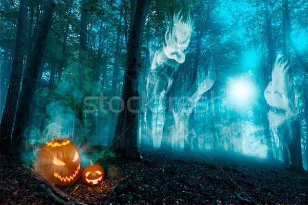 Beech Forest Fog Sunbeam Stock photo © limbi007