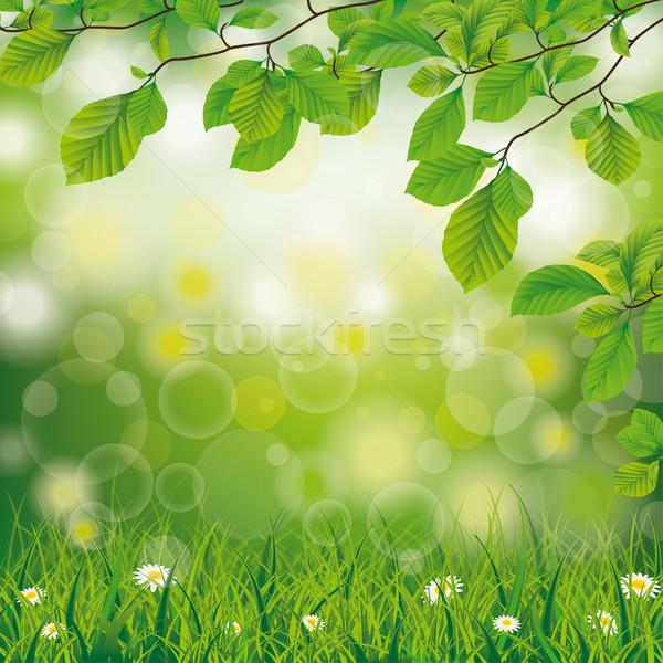 Paskalya bahar çim papatya çiçekler beyaz çiçekler Stok fotoğraf © limbi007