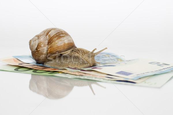 Roman Snail On Euro Notes Stock photo © limbi007