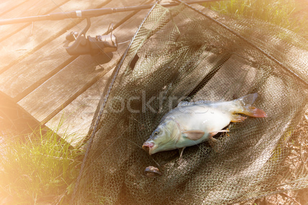 Carp In The Landing Net Stock photo © limbi007