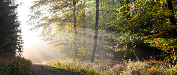 Herbst Wald Sonnenstrahlen Straße Holz Bäume Stock foto © limbi007
