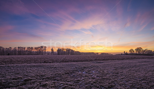Rano chwała zamrożone charakter drzewo słońce Zdjęcia stock © limbi007