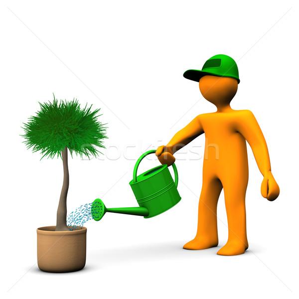 Gardener Watering Palm Stock photo © limbi007