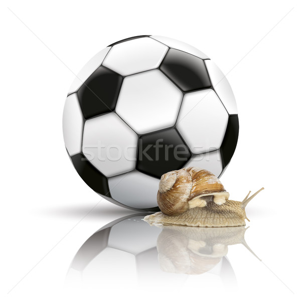 Football Mirror Background Snail Stock photo © limbi007