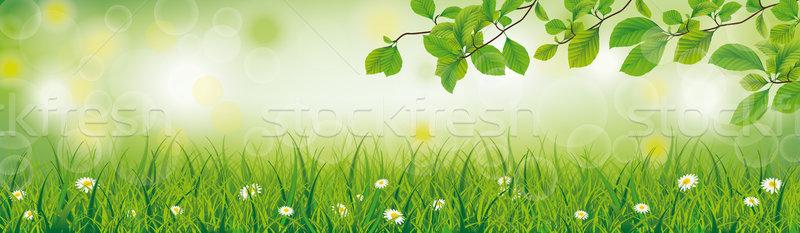 Printemps herbe tête fleurs blanches bokeh eps Photo stock © limbi007