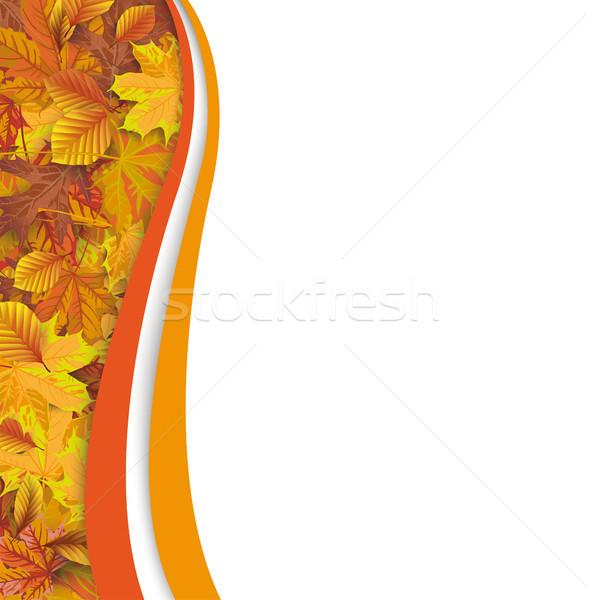 Autumn Flyer Oblong Foliage Stock photo © limbi007