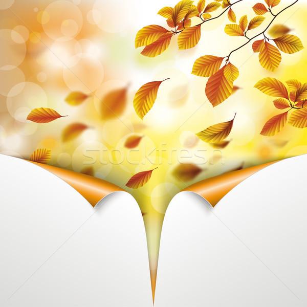 Autumn Foliage Fall Beech Sunlights Rolled Corners Stock photo © limbi007