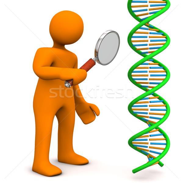 Manikin Loupe DNA Stock photo © limbi007