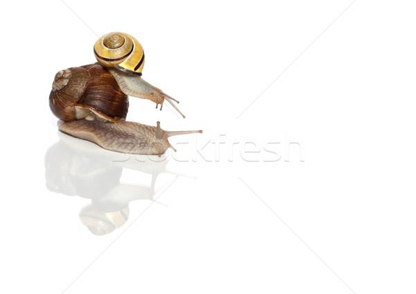 Snail Passenger Transportation Stock photo © limbi007