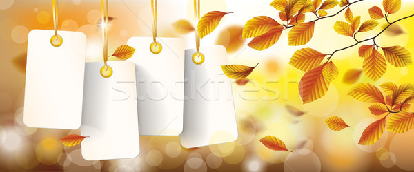Autumn White Price Stickers Beech Foliage Header Stock photo © limbi007