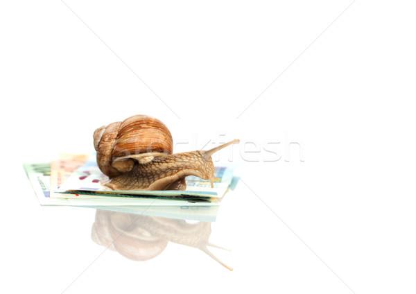 Snail On Euro Notes Stock photo © limbi007