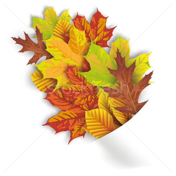 Convert Napkin Autumn Foliage Stock photo © limbi007