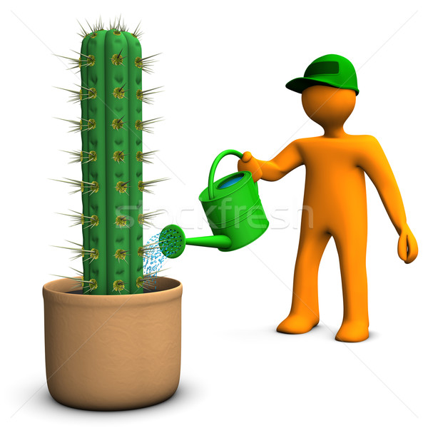 Cacti Gardener Stock photo © limbi007