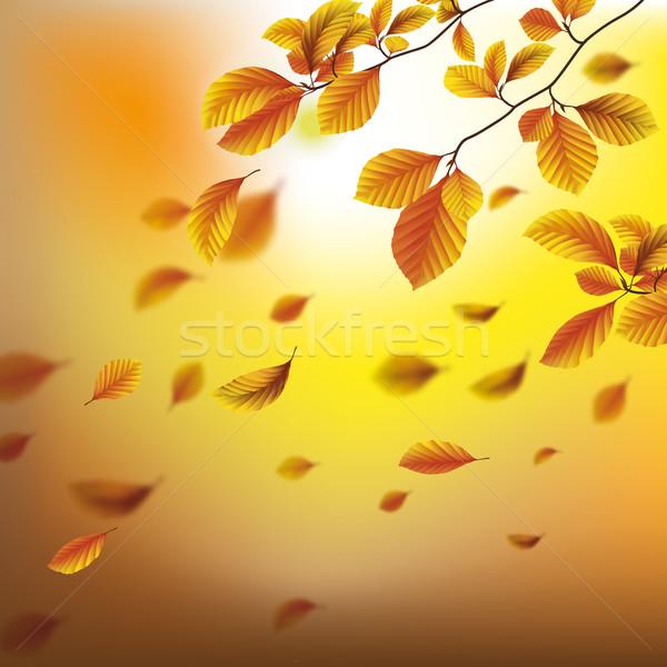 Autumn Foliage Fall Beech Corofull Background Stock photo © limbi007