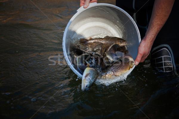 Brown Trout Fish Farm Stock photo © limbi007