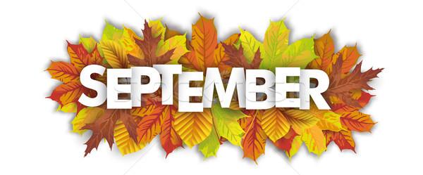 Autumn Foliage September Header White Background Stock photo © limbi007