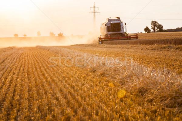 Combine Harvester Wheat Crop Stock photo © limbi007