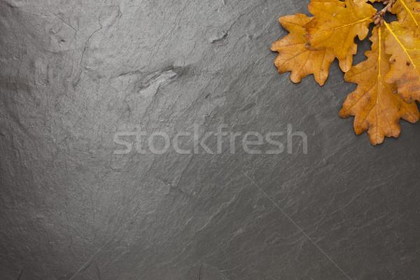 黒板 秋 オーク 葉 色 ストックフォト © limbi007