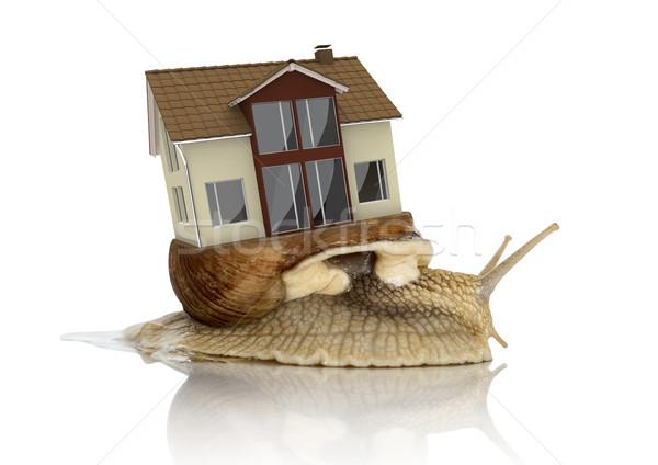 Casa transporte caracol romana vida blanco Foto stock © limbi007
