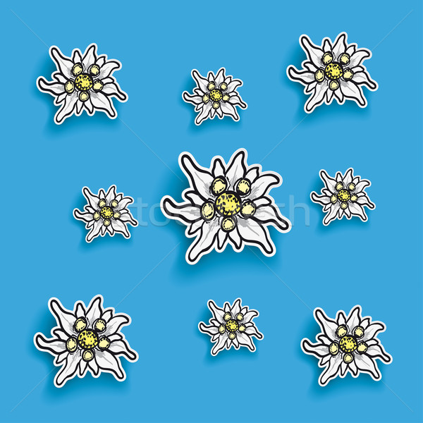 Edelweiss Paper Blue Background Stock photo © limbi007