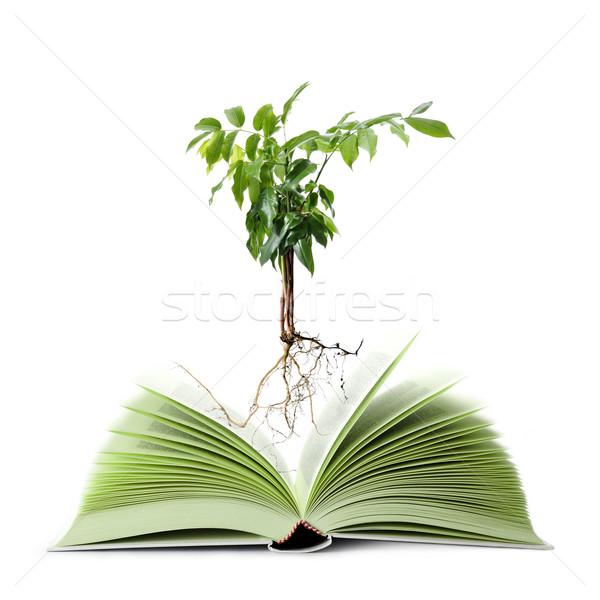 Yeşil kitap geri dönüşümlü kâğıt okul Stok fotoğraf © limpido