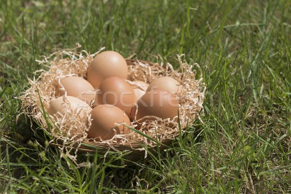 Yumurta çim grup saman sepet gıda Stok fotoğraf © limpido