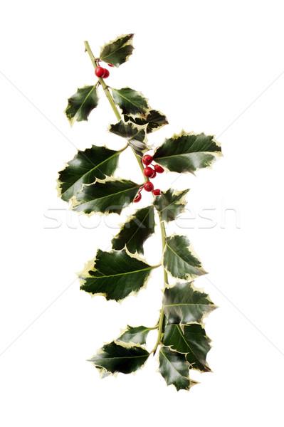 Kırmızı karpuzu yalıtılmış beyaz arka plan yeşil Stok fotoğraf © limpido