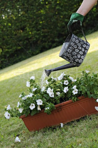 садоводства банка цветы саду зеленый Сток-фото © limpido
