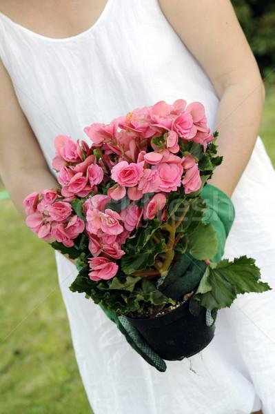 Сток-фото: садоводства · банка · почвы · завода · цветы · саду