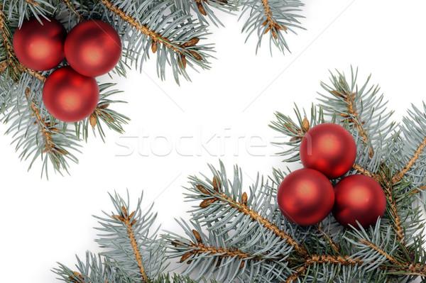 Рождества красный соснового филиала изолированный Сток-фото © limpido