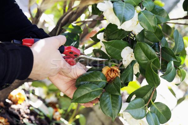 gardening Stock photo © limpido