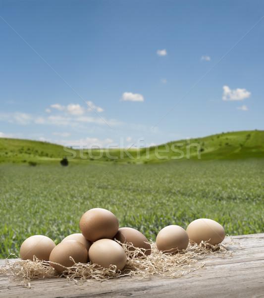 Yumurta grup ahşap masa yaz manzara yumurta Stok fotoğraf © limpido
