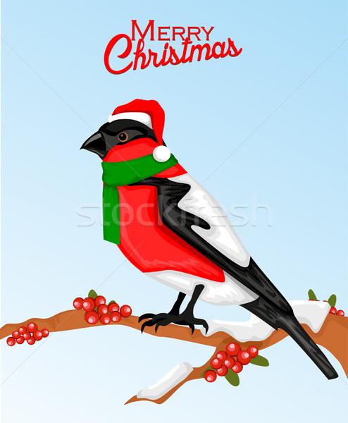 Christmas bullfinch bird in santa hat Stock photo © lindwa
