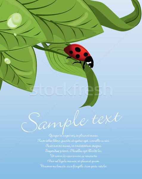 Katicabogár zöld levél levél kék növény grafikus Stock fotó © lindwa
