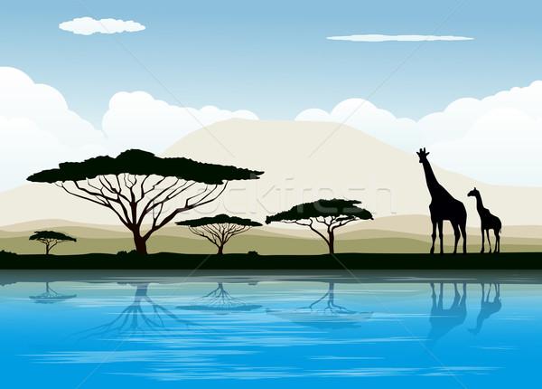 アフリカ サバンナ 青 1泊 日の出 赤 ストックフォト © lindwa