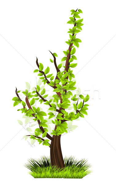 Season tree with green leaves Stock photo © lindwa