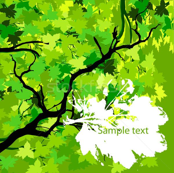 Feuilles vertes arbre forêt fond été vert Photo stock © lindwa