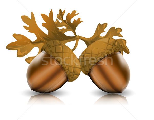Acorns with leaves Stock photo © lindwa