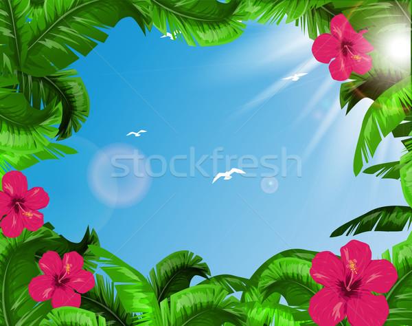 Tropical folhas árvore floresta projeto jardim Foto stock © lindwa
