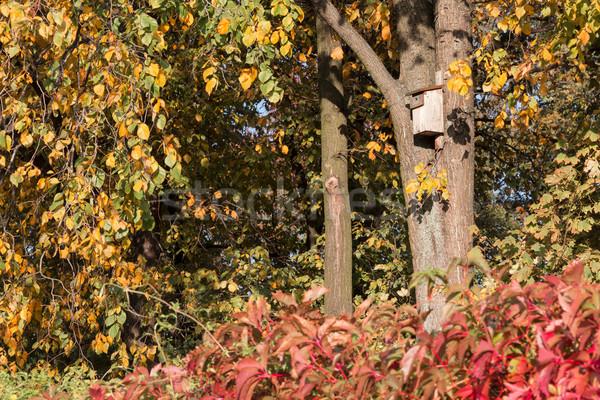 Nid cases arbres automne paysages ciel Photo stock © linfernum