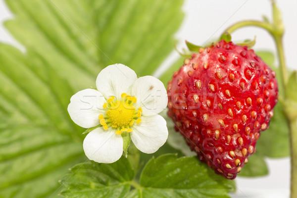 Fraîcheur feuille fruits santé vert Photo stock © linfernum