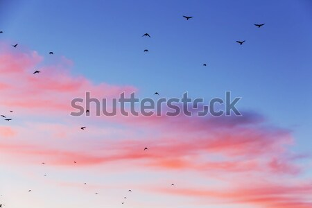 Sunset with shape of birds. Stock photo © linfernum